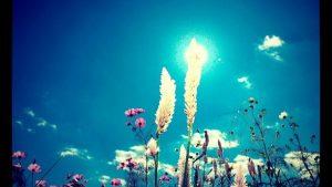 空に太陽がある限り〜instagram photo