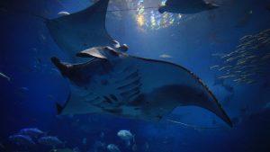 ちゅら海水族館(沖縄)~暗い場所での写真撮影を楽しむ方法